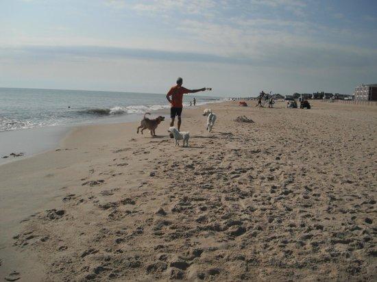 Dewey Beach, 2013