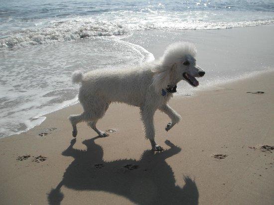 Dewey Beach: Woof!