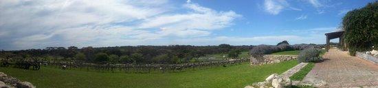 Cape Jaffa Wines: Panorama shot of the vineyard