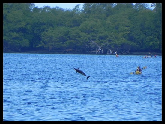 Kealakekua Bay State Historical Park: Dolphins & Kayakers