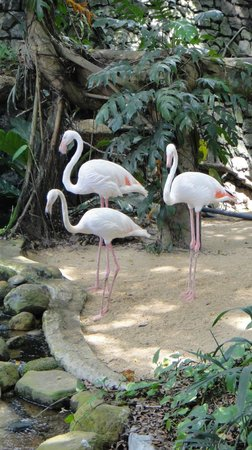 National Zoological Gardens of Sri Lanka: close up good pic
