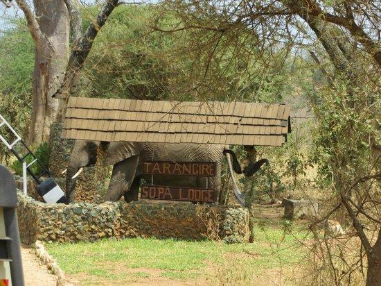 Tarangire Sopa Lodge: Entry to the Lodge