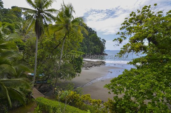 Campanario Biological Station : View of the beach