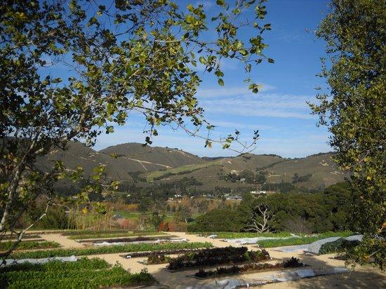 Carmel Valley Ranch: Beauty