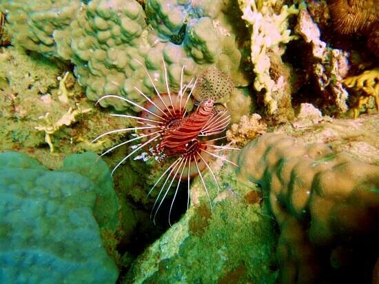 Coco Dive Center: lionfish