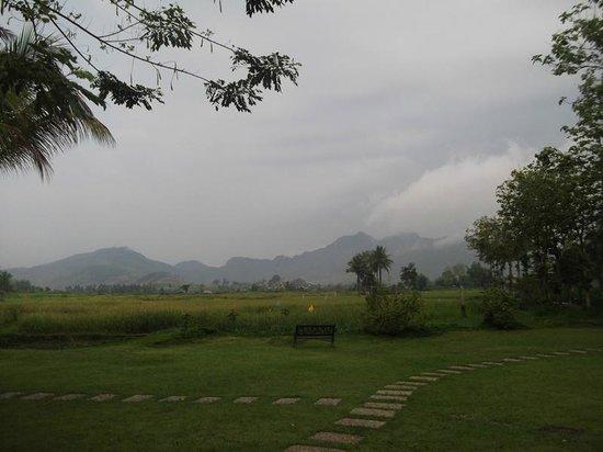 Santi Resort & Spa: Paddy field