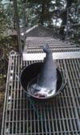 A River's Edge B & B: Yum!!!  A Silver Salmon