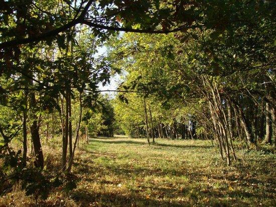 La Closerie du Lys - Le parc en été