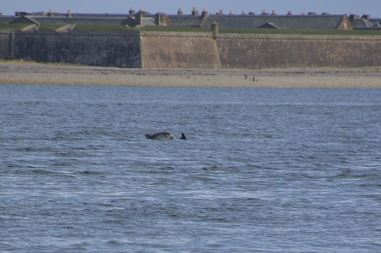 St Ann's House: Chanonry Point : Dauphins :)