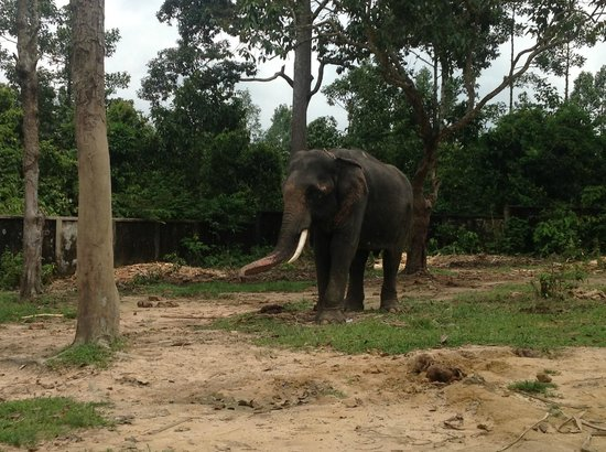 Dulahazra Safari Park, Cox's Bazar, Chittagong