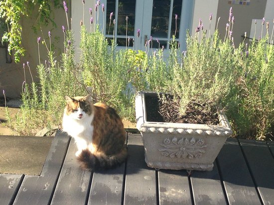 De Oude Pastorie Guesthouse: she is waiting at the decking in front of our house.
