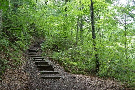 Shirakami Sanchi: 暗門ぶな林散策歩道