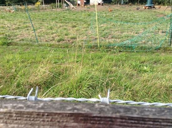 Ilsington Country House Hotel: Barbed wire running behind rail on outer fence to chicken coop.