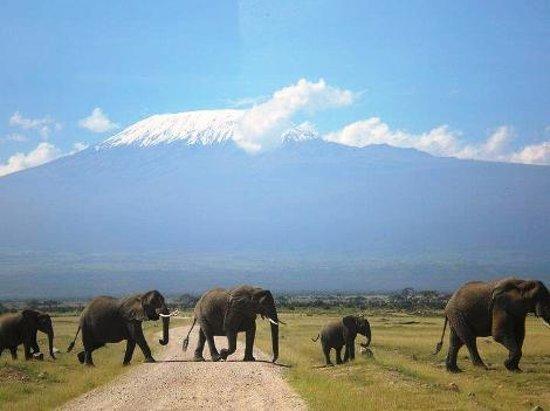 Bwindi Impenetrable National Park : Elephants in Amboseli National Park