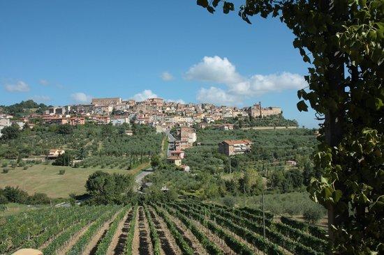 Agriturismo La Pietriccia : view