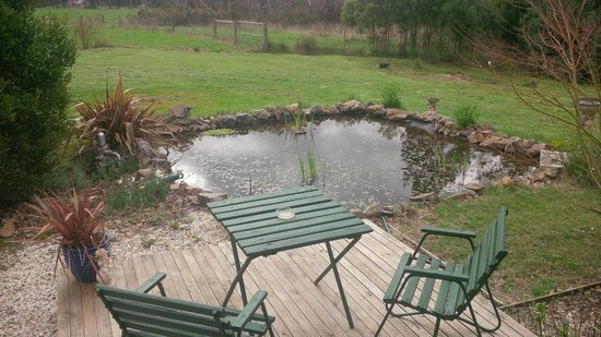 Wombat Cottage B&B: our backyard for the weekend
