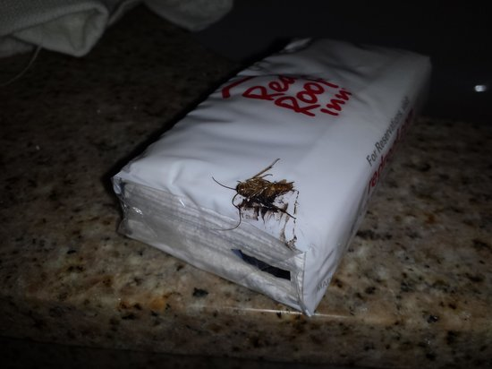 Red Roof Inn Tallahassee - University: roach pre killed with tissue package