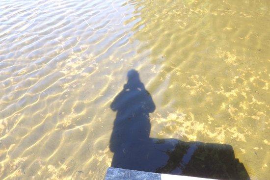 Cecil Fireside Inn : On Lake LuLu
