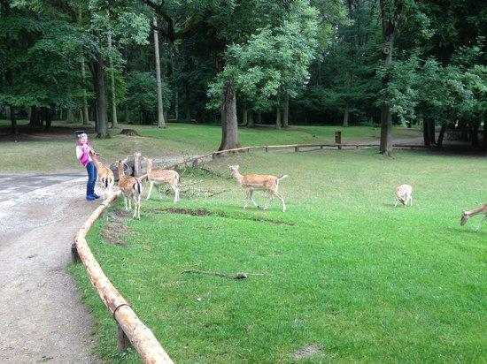 Wildpark Dusseldorf: The deers follow plastic bags sound )