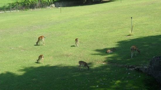 Parco Giardino Sigurta: la valle dei caprioli