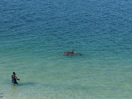 Quality Hotel On the Beach: Watching from our balcony, the boy didn't see dolphin approaching!