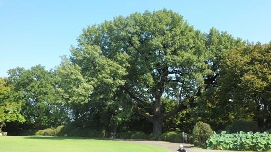 Parco Giardino Sigurta: la grande quercia
