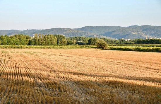 Agriturismo Borgo Laurice : Tout au bout le Tibre vous attends.