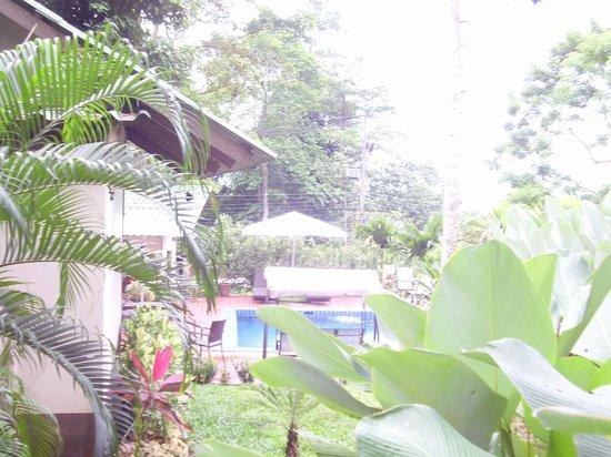 Saint Tropez Guest House: environnement de la piscine