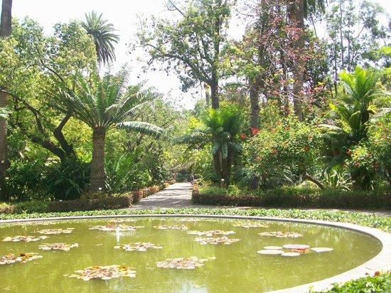 Botanical gardens picture of botanical gardens jardin botanico puerto de la cruz tripadvisor - Botanical garden puerto de la cruz ...