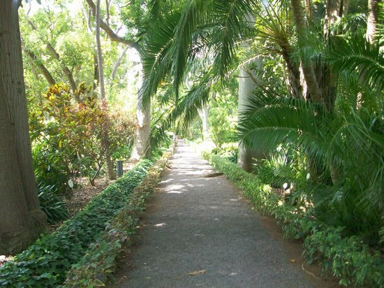 Botanical gardens picture of botanical gardens jardin for Jardin botanico de tenerife