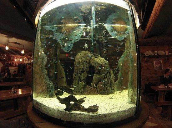 U Babci Maliny: Fish tank