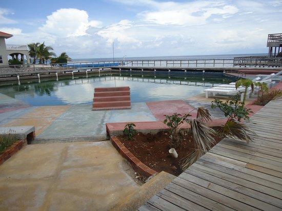 Coral View Beach Resort: The Dive pool
