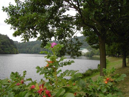 Dorint Seehotel & Resort Bitburg/Sudeifel : vom Rundweg des Sees aus Blick auf das Hotel