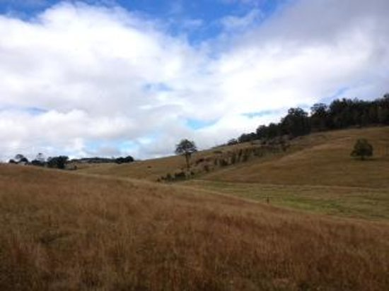 Lillydale Farmstay: View at Lillydale farm