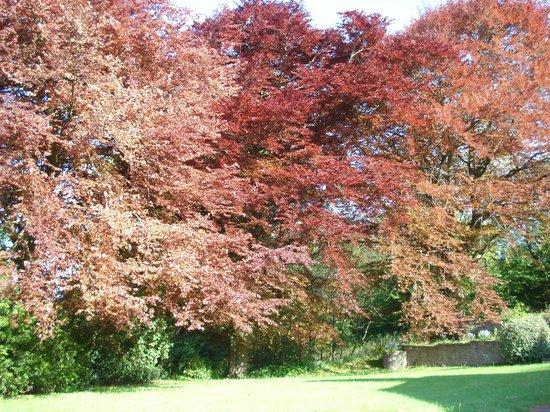 Copper Beeches : giardino