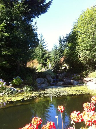 Wetherly Inn: The view from the pond.