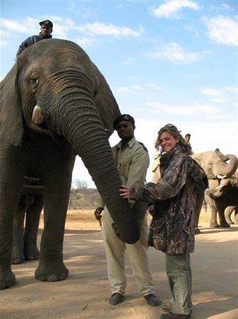 Camp Jabulani Elephant Experience: Getting close to the Elephants