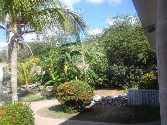 Camacuri Apartments Aruba: tuin