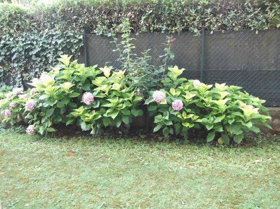 Bed and Breakfast Agli Aceri: giardino fiorito