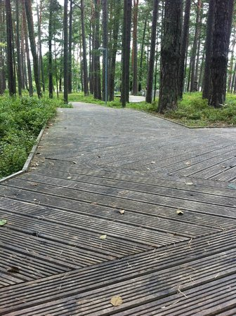 Dzintari Forest Park: Wooden paths