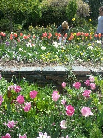 Sarah P. Duke Gardens: Layered Gardens