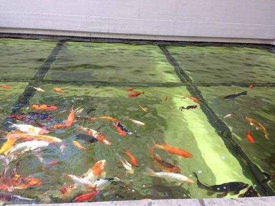 Leonardo Da Vinci: Foto do aquario,o restaurante é em baixo.