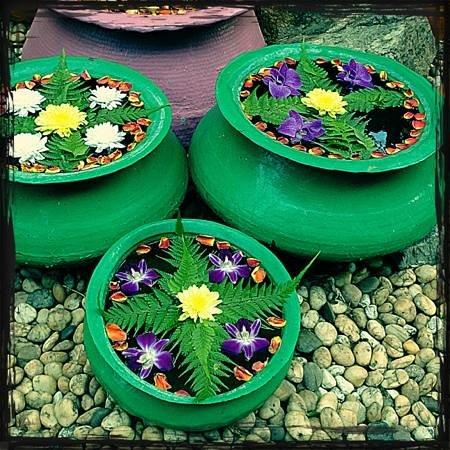 Baan Samui Resort: beautiful flower pots arranged daily by the garden gentleman.