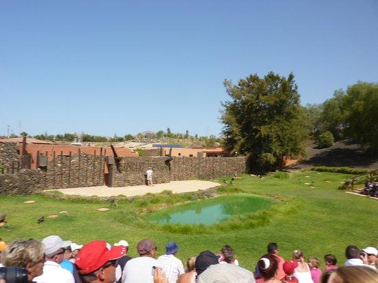 vista - Picture of Rancho Texas Lanzarote Park, Puerto Del Carmen - TripAdvisor
