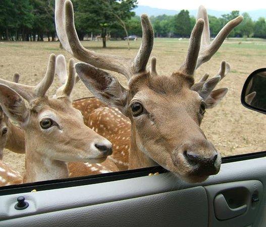Huntsville, AL: Deer