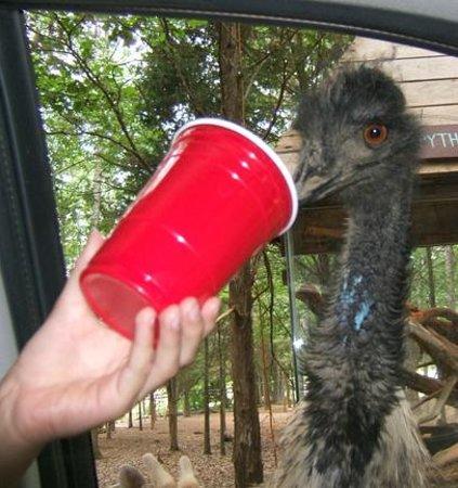 Harmony Park Safari: Emu