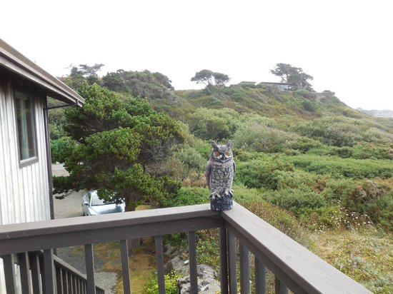 Lighthouse Bed and Breakfast: Owl on Porch veranda