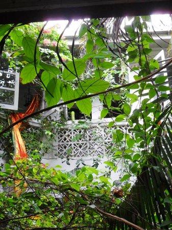 House of Arts: vista del giardino