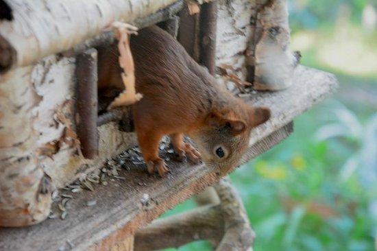 Neljan Tuulen Tupa: Lo scoiattolo che ruba i semi agli uccellini