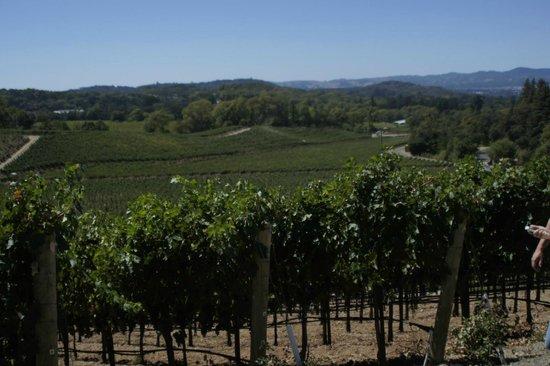 View from Palmaz Vineyards